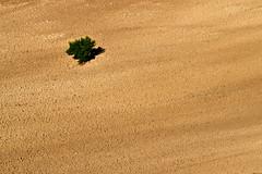 il colore della terra (luporosso) Tags: natura nature naturaleza naturalmente nikon nikond500 nikonitalia minimal minimalism minimalismo terra heart albero tree country countryside scorcio scorci colline hills