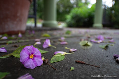 Seasonal (Brian M Hale) Tags: laowa 15mm f4 macro lens closeup close up outside outdoors botany botanical flower boylston ma mass massachusetts brian hale brianhalephoto usa new england newengland