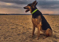 xara dog doberman shepherd sand cloud island landscape... (Photo: LUSEJA on Flickr)