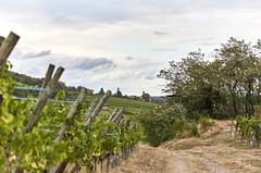 Sur la route des vins ~ Vine's road (Emmanuel Cattier -) Tags: france alsace basrhin scherwiller ciel vigne paysage village dieffenthal