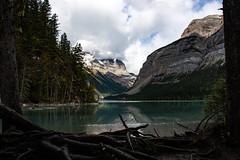 _DSC0665 (marcella.cavelli) Tags: canada britishcolumbia alberta squamish whistler banff jasper clearwater sky falls tree hike hiking trail trip snow lake wood ab bc
