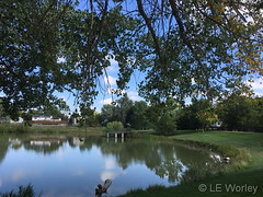 September 5, 2018 - Pond reflections in Thornton. (LE Worley)