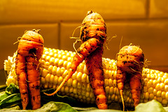 ..left right..march of the organic tribe.. (dawn.tranter) Tags: dawntranter organic carrots food