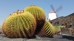 Jardin de Cactus - Lanzarote - 2018-09-13 (BillyGoat75) Tags: cactus cacti garden windmill jardindecactus gauliza lanzarote thecanaryislands spain