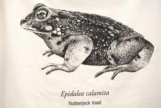 Natterjack Toad @ SE22