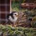 Pour un jardin bio, le meilleur des pesticides._DSC4222