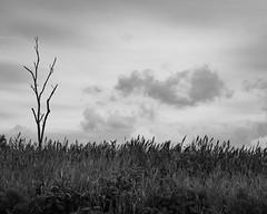 Gray clouds (cwreace) Tags: d500 sky voigtlander40mm monochrome blackandwhite