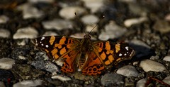 Orange (PhotogMikey) Tags: rocks monarch butterfly orange