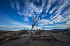 Dawn at the Dunes (CraDorPhoto) Tags: canon5dsr landscape tree sky clouds blue dawn morning sand california usa outdoors nature deathvalley