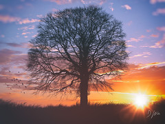The Roost (domwlive) Tags: trees spring castleeden silhouette sunset skies march countydurham landscapes evening northeastengland light england unitedkingdom gb