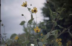 Summartime (elmar35) Tags: prominent ultron snap street 50mm tokyo art film fujifilm fujicolor summer voigtlander