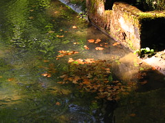 Дыхание осени / Breath of autumn (Владимир-61) Tags: листва осень вода абхазия пицунда foliage autumn abkhazia pitsunda