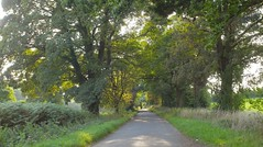 Suffolk Country Road.. (Adam Swaine) Tags: broads broadbritain broadsuk uk ukcounties trees suffolk counties countryside england english rural county countrylanes canon britain british naturelovers nature hedges hedgerows
