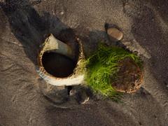 mupfel (spline_splinson) Tags: bulgaria blacksea bulgarien grün kamchiya kamchiyakomplex muschel schwarzesmeer аврен warna bg
