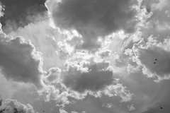 the glory of a monsoon (Star Tornero Photo) Tags: monsoon bw cloud sky sunlight bird flying amazing tucson az arizona dsc0438 fullframe uncropped
