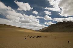 little shepherd (DeCo2912) Tags: ladakh india jammu kashmir yak shepherd