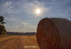 Erntezeit (Light and shade by Monika) Tags: münster münsterland natur ernte felder landschaft sonne sun licht