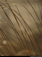 20170101_38 Grass straws & bokeh | Rockaway Park, New York City (ratexla) Tags: ratexlasnewyorktrip2016 newyorkcity 1jan2017 2017 canonpowershotsx50hs nyc newyork usa theus unitedstates theunitedstates america northamerica nordamerika earth tellus photophotospicturepicturesimageimagesfotofotonbildbilder wanderlust winter travel travelling traveling journey vacation holiday semester resaresor urban city town storstad storstäder storstadssemester newyearsday ontheroad rockawaypark rockawaybeach beach beaches strand stränder sandy sandstrand sand grass gräs nature plant plants pretty cool biology botany wild vild vilda life organism växt växter bokeh beige favorite