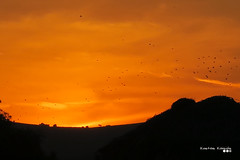 Escape from burning sky... (Κώστας Καϊσίδης) Tags: flockofbirds birds flock sunset burningsky landscape sky clouds cloudography autumn september nature greece hellas ngc canon scene scenery