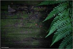 die Rückkehr des Grüns (geka_photo) Tags: gekaphoto magdeburg sachsenanhalt deutschland marode marodes farn grün verlassen abandonned lostplace