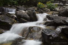 Tumbling Waters (right2roam) Tags: washington northwest state granitecreek tumblingwaters selkirk mountains rockies cascade stream creek right2roam rocky flowers flowing