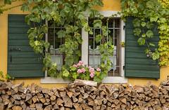 Finestre dolomitiche (stgio) Tags: windows colours mountains tradition dolomiti cadore italy montagna flowers