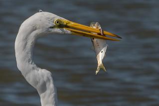 Spear Fishing