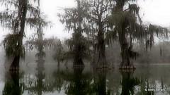 3-foggy-swamp-betty-berard (tanyapavlicapschyrembel) Tags:
