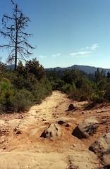 Scan-180919-0008 (alberthuynhphoto) Tags: big basin redwoods redwood state park 35mm fujifilm fuji superia 200 iso film nikon f3