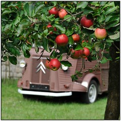 Citroen HY and the Apple tree (hromadkah) Tags: 20jahrewoidantnstiefern citroen hy