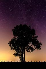 """""""Where there is light there is also shadow."""" ([-ChristiaN-]) Tags: milky way shadow tree baum schatten licht milchstrasse galaxy glaxis sterne stars starry light night gradient dunkel lichtverschmutzung pollution dark darkness deep sky himmel germany braunschweig deutschland mars planet dämmerung"""