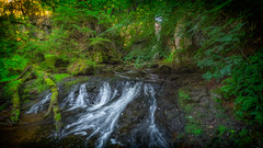 M a g i c a l ( inExplore) (L A H Photography) Tags: woodland forest light water cascade flowing contrast nature outdoors rugged landscape foliage