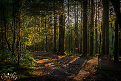 The Warren (geraintparry) Tags: uk landscape light nikondd500 d500 nikon nature caerphilly south wales outdoor morning wood woods forest tree trees warren woodland woodlands geraint parry geraintparry sunrise sun