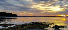 Sunrise  20180907_060715 (LarryJ47) Tags: samsung s7 maine mount desert island sea ocean gull seagull water sunrise color landscape seascape bird nature