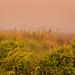 Wallkill Field at Dawn.jpg
