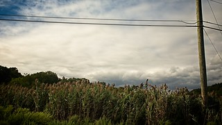 Field of Wild Grasses