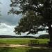 Natchez Trace - Pharr Mounds