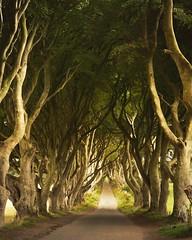 The Dark Hedges (Arnaud Regnier) Tags: the dark hedges irland a6300 sonya6300 landscape paysage tree trees arbre arbres