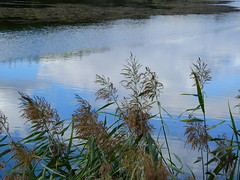 DSCN5119. (jeanchristophelenglet) Tags: santeuilfranceétangdevallière nature natureza paysage landscape paisagem reflet reflection reflexo