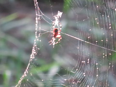 Congaree National Park (JJP in CRW) Tags: spiders insects southcarolina nationalparks congaree
