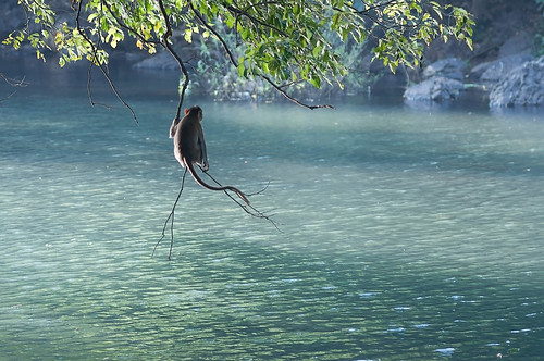 Thoughtful loner monkey