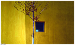 Das Bäumlein / the little tree (Reto Previtali) Tags: tree gelb yellow windos fenster architektur architecture blue blau white weiss ast branch beton concrete haus house light licht new neu city stadt schweiz switerland land country blatt leaf trees park linien lins lines clouds outside aussen wolken tag day coth5 avatar historic art modern nikkor flickr digital tamron70300 nikon pixel
