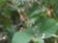 Nothing like a good stretch,Spider. (dave p brecks) Tags: stretchspider invertebrates panasonicdmcg80 olympus60mmmacro