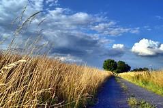An afternoon walk (Tobi_2008) Tags: landschaft landscape sommer summer natur nature himmel sky wolken clouds sachsen saxony deutschland germany allemagne germania