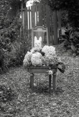 bounty with bunny... (bunchadogs & susan [off sick]) Tags: autumn chair fowers hydrangeas bunny fortunacalifornia