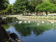 estanques en Parque Alces Alcazar de San Juan Ciudad Real 01 (Rafael Gomez - http://micamara.es) Tags: estanques en parque alces alcazar de san juan ciudad real