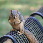 Squirrels in Ann Arbor at the University of Michigan on September 11th & 12th, 2018 thumbnail