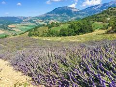 purple land (Katten Katze) Tags: lavande montagne moutain flower nature dignelesbains purple france