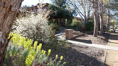 garden and N014 (spelio) Tags: mal mj home old house sep 2018 belconnen act canberra australia