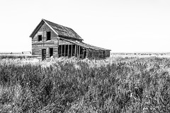 Broadview, Montana (paccode) Tags: solemn d850 landscape bushes brush blackwhite quiet urban home summer abandoned barn monochrome forgotten grass house shack scary creepy montana farm serious field broadview unitedstates us